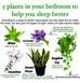5 Plants In The Bedroom To Help You Sleep Better