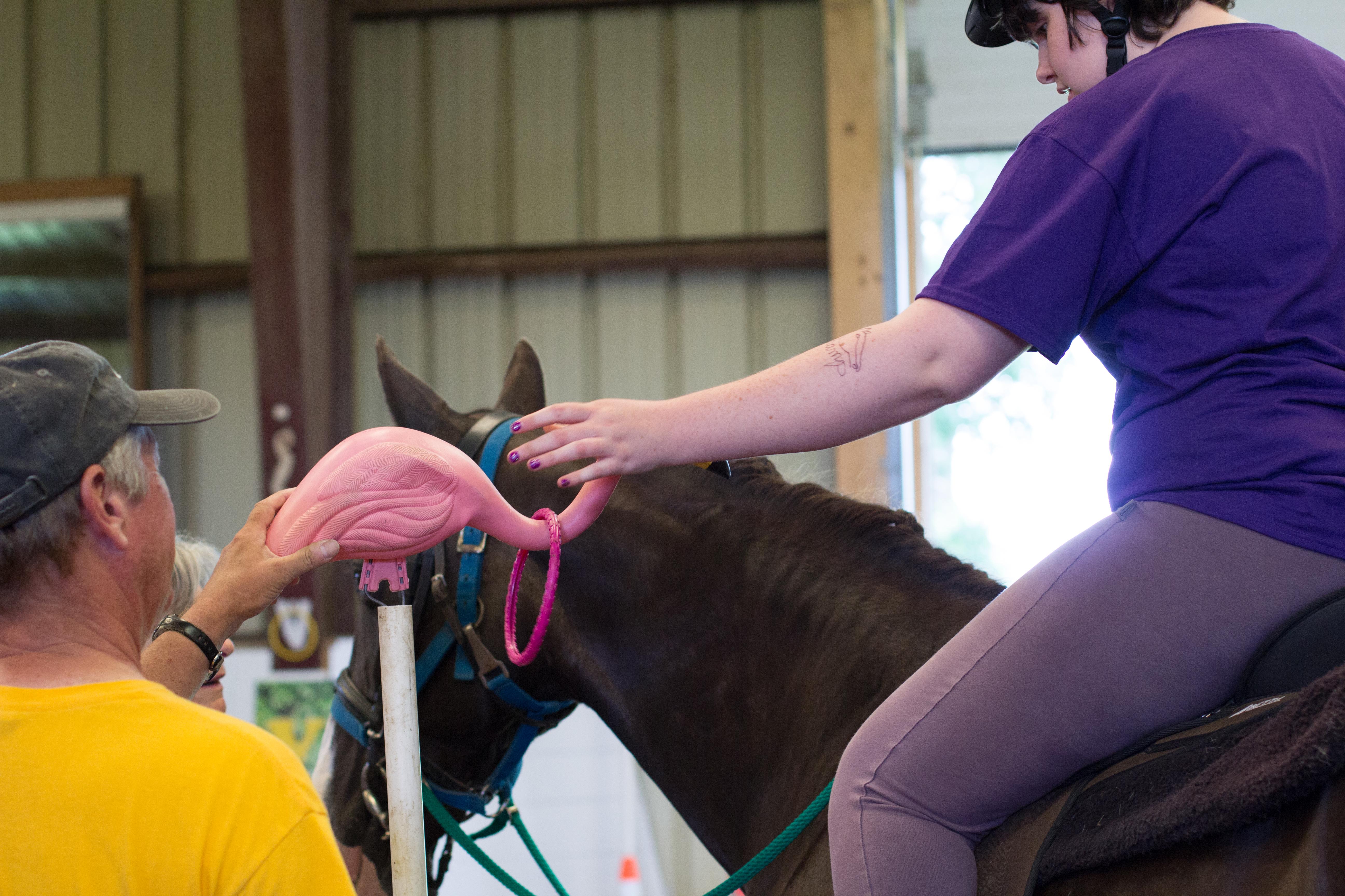 Horse Show 2017-7401
