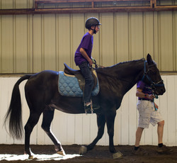 Horse Show 17-7145 2