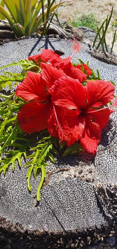 Hibiscus on Coconut Tree