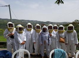 bees 1.jpg