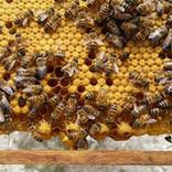 Beekeeping in Vavla