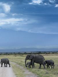 Human-wildlife coexistence