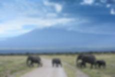 Herde von Elefanten