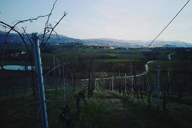 First day of pruning _ Le Stroppigliose #feelinggood  #relaxingday #pruning #lestroppigliose #verdic