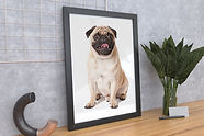 preview (3)dog.jpg