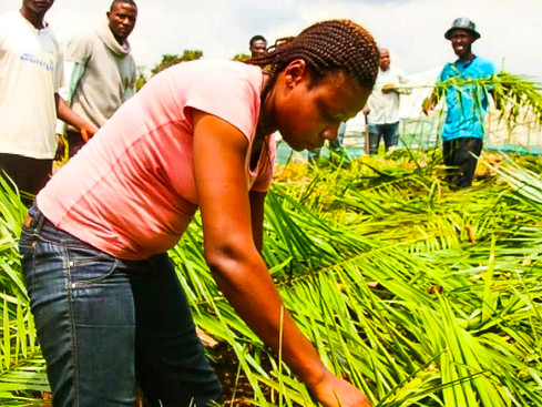 Meet The 28 Year Old Woman Doing Exploit in Agriculture.