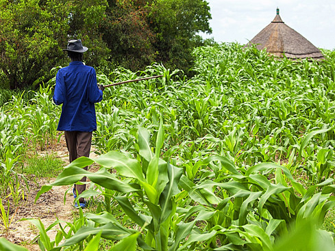 Commercial Agriculture A Panacea To Youth Unemployment In Nigeria