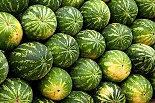 watermelon-2636_1920.jpg