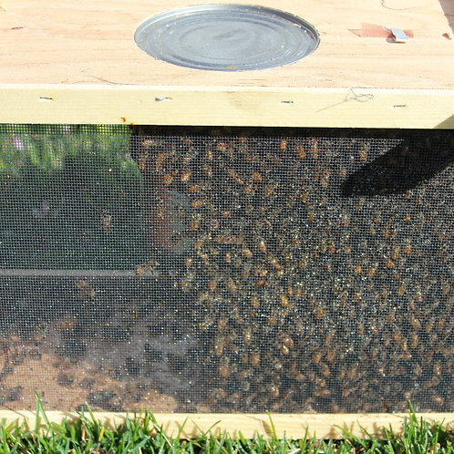 3 lb. Bee Package with Mated Queen