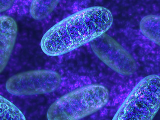 The importance of MITOCHONDRIA. (why it is the first goal)