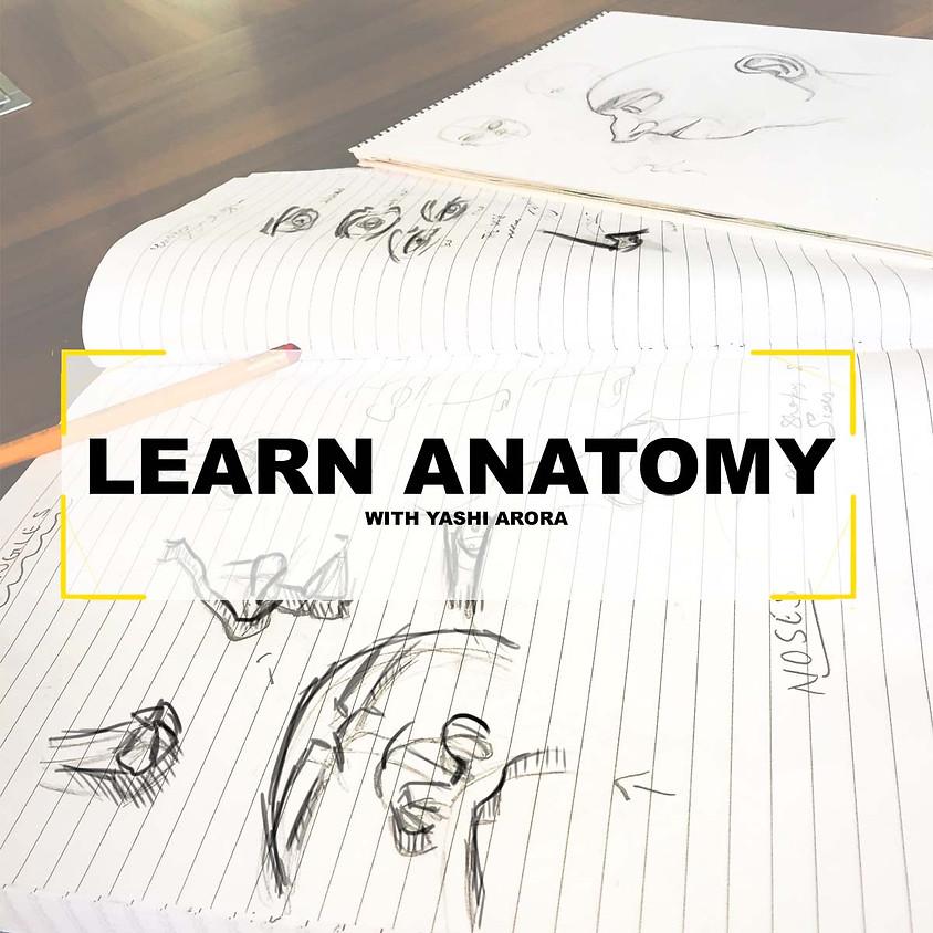 Artist Anatomy - Basic