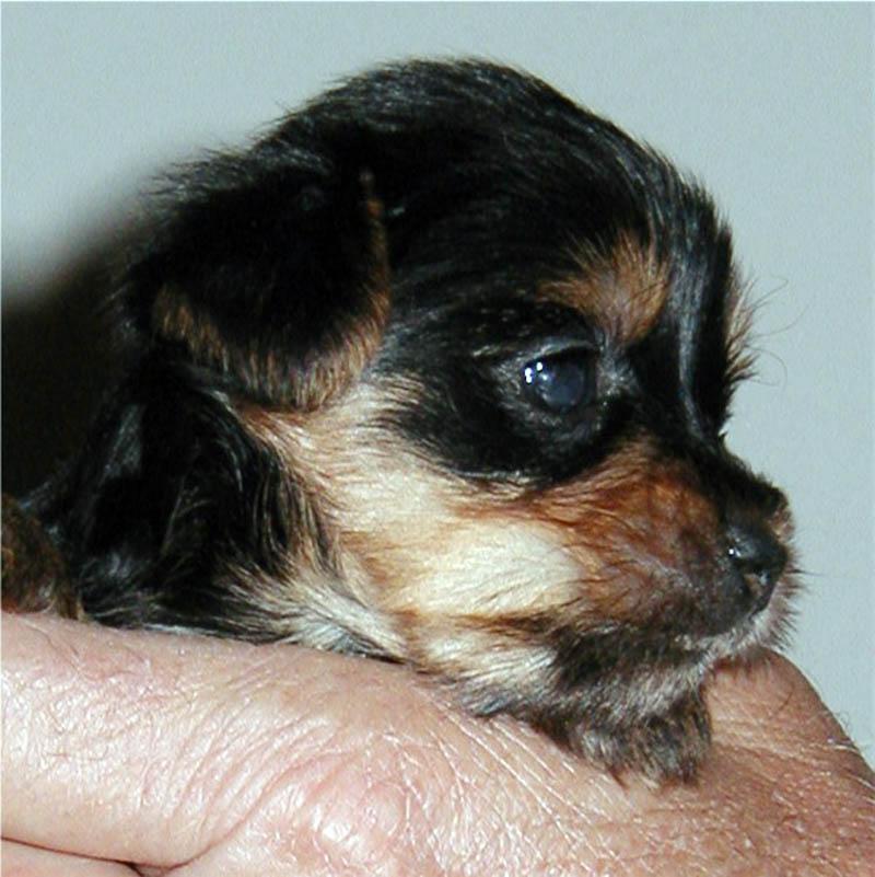 puppy27