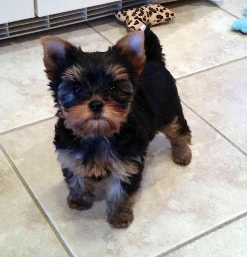 puppy08