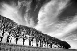 Trees Meet Sky