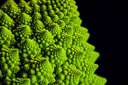 Planet Vegetable