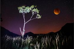 Luner  eclipse