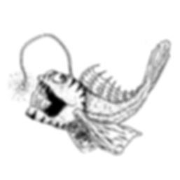 angler fish white-01.png