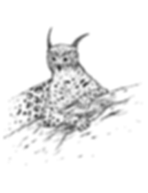 Owl whitepng.png