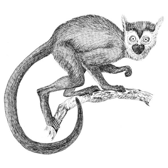 Scott the squirrel monkey