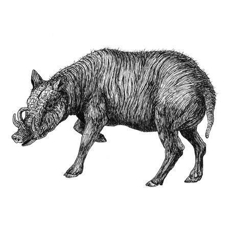 Warren the warthog