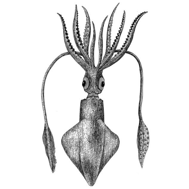 Siegfried the giant squid