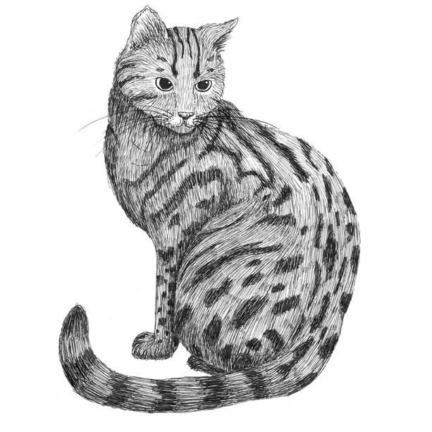 Tabitha the tabby cat