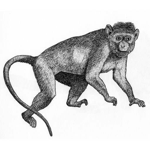 Murray the macaque