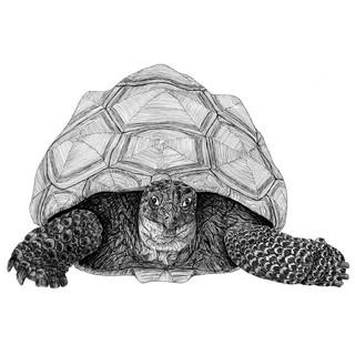 Terry the tortoise