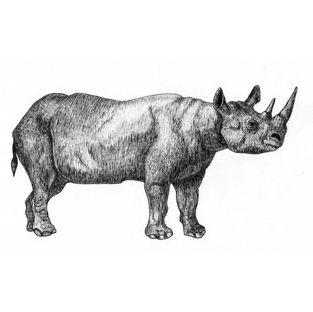 Rhys the rhino