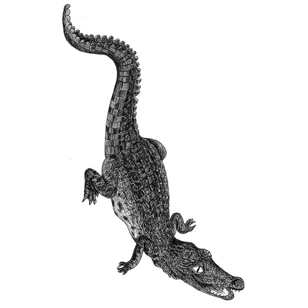 Chris the crocodile
