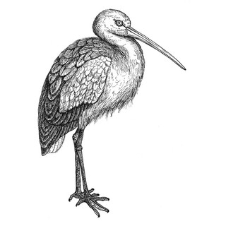 Sally the stork