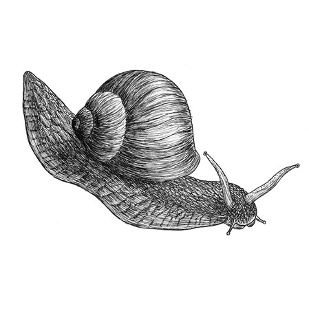 Sebastian the garden snail