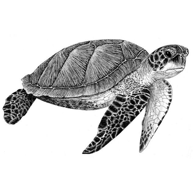 Tabitha the turtle