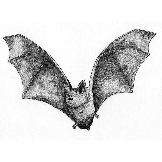 Bart the bat