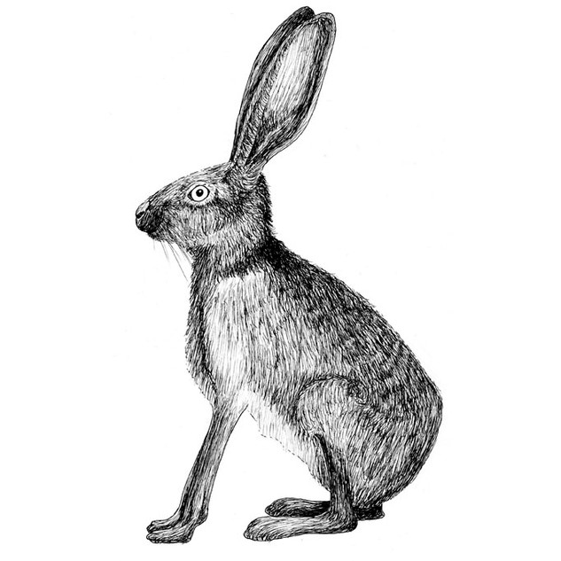 Henry the hare