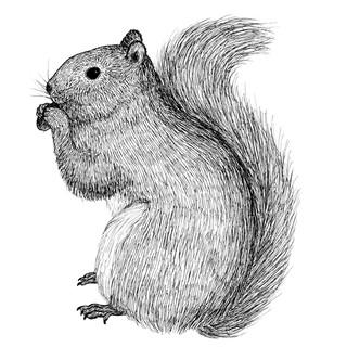 Sisley the squirrel