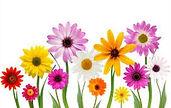 may.flowers.08.jpg