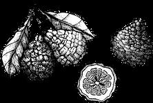 Bild mit Botanics aufgeschnitten und am Strauch