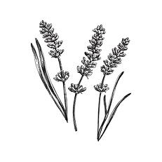 Lavendel wirkt beruhigend und entspannend, die perfekte Einschlafhilfe