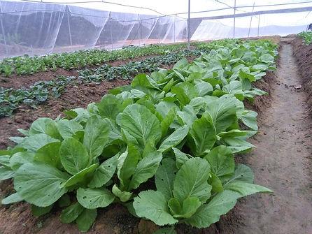 FOLO Farm-2.jpg