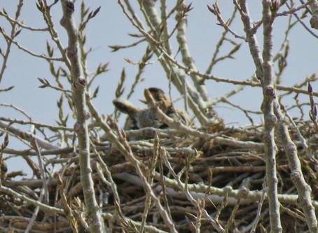 Venetucci Farm Birding Diary: Raptor Ecology