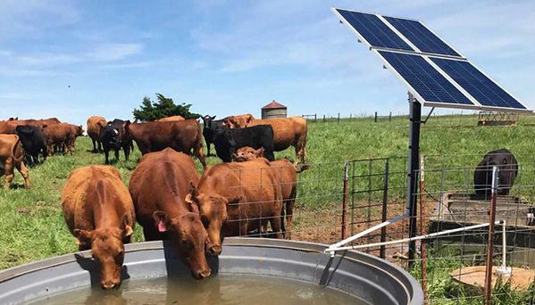 solar-water-pump-livestock-1024x569-1024
