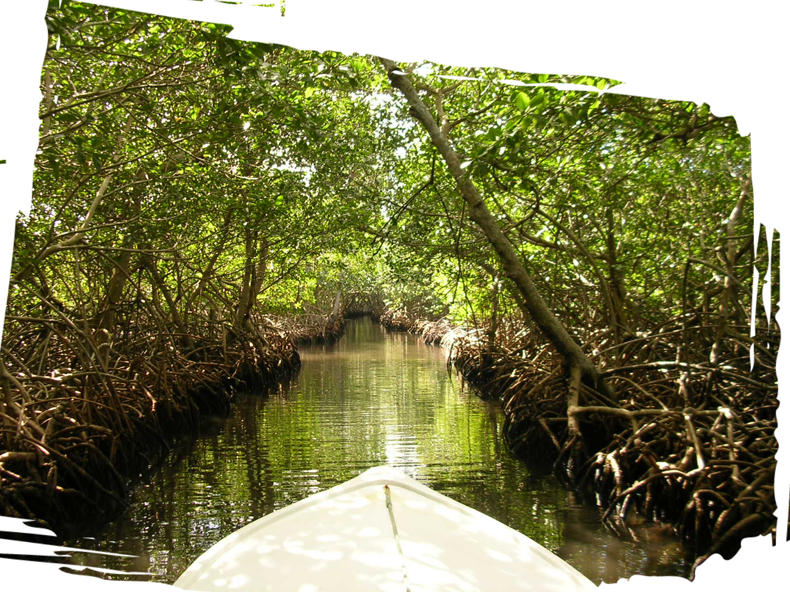 VISIT THE MANGROVES