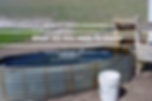 wsa flowing artesian well.jpg.png