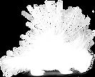 stekelvarken-wit - silhouette.png