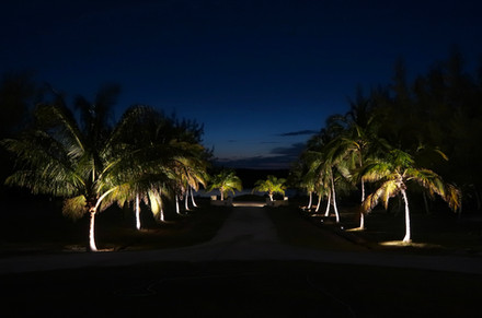 The majestic driveway at night