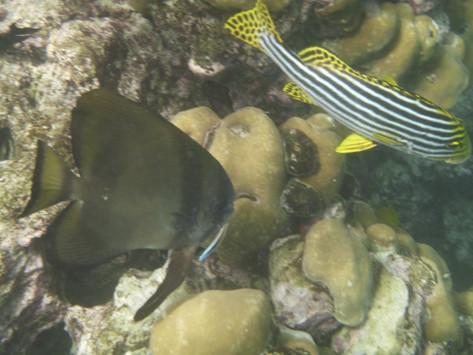Fantasiewelt unter Wasser