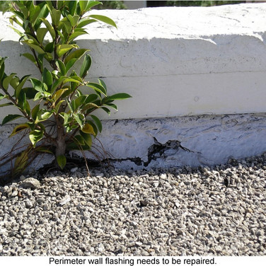Plant growing on roof means there is trapped moisture.