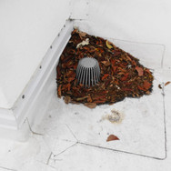Debris on roof could clog drains.